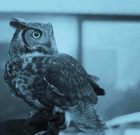 Night Owls May Face Special Challenges >> Morning People Vs Night Owls 9 Insights Backed By Science