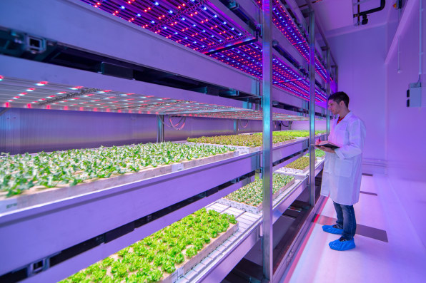 "In This Huge Urban Farming Lab, LED ""Recipes"" Grow Juicier Tomatoes An"