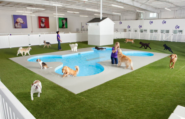 Check Out The World's First Airport Terminal For Pets