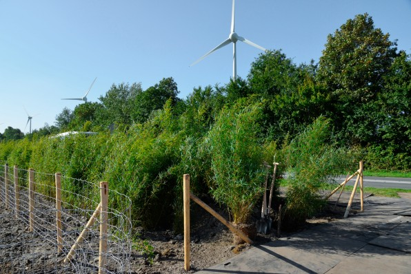 This Living Bamboo Highway Barrier Blocks Traffic Noise