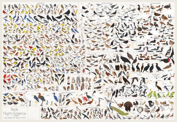 Infographic 730 North American Birds In A Single Chart