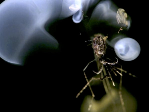 What Happened To The Mosquito-Zapping Laser That Was Going