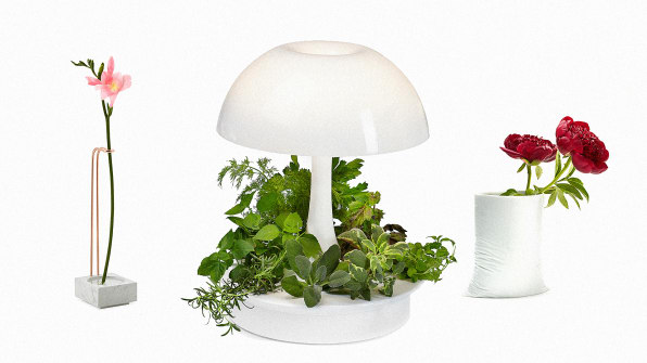 6 Ways To Make Your Indoor Plants Look Like Modern Art