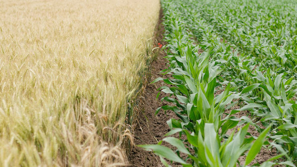 Harnessing The Plant Microbiome For Cleaner, Pesticide-Free Agriculture