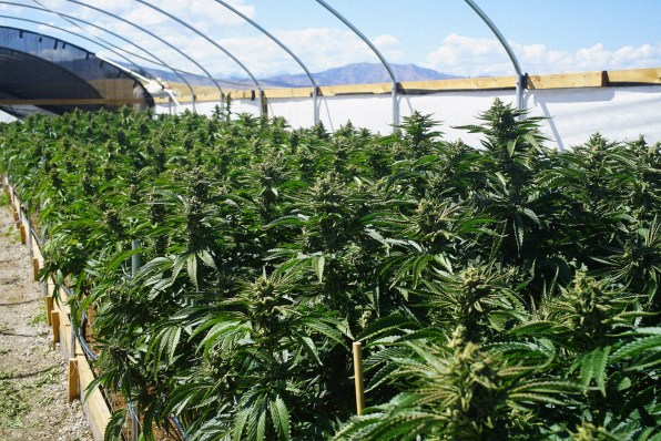 Why Dont We Know What Environmental >> We Still Don T Know Enough About The Marijuana Industry S Environmenta