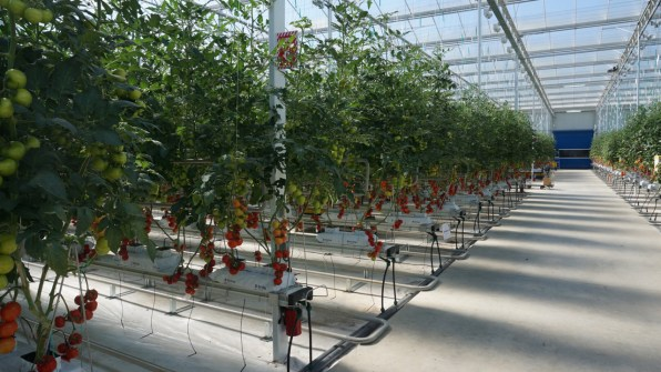 This Midwestern Greenhouse Has Perfected The Art Of Growing Quality To