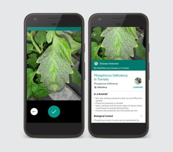 Machine Learning Helps Small Farmers Identify Plant Pests
