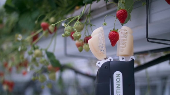 This Strawberry-Picking Robot Gently Picks The Ripest