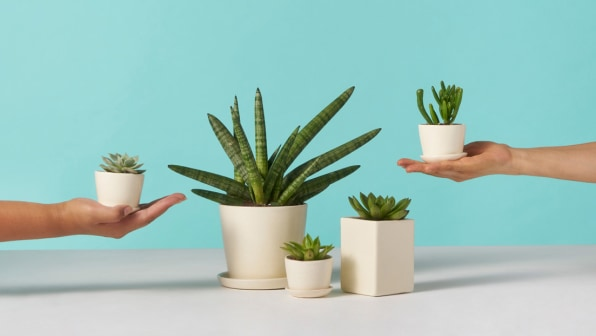 These startups sell plants to stressed-out millennials