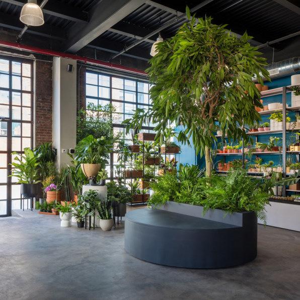 These startups sell plants to stressed-out millennials on plants at sam's club, plants at homegoods, plants that repel bugs and pests, plants inside home, plants at ikea, plants under evergreen trees, plants at office depot, plants at michaels, plants with white flowers, plants that repel mosquitoes, vines depot, plants at safeway, plants at disney, plants at kroger, plants at menards, plants at publix, plants at tj maxx, plants at harris teeter, plants at cvs, plants at kmart,