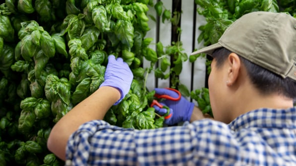 These shipping container farms will soon be in grocery store lots across the U.S.