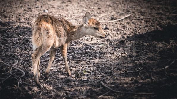 Afbeeldingsresultaat voor wildlife suffering