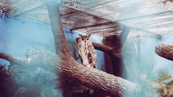 Should zoos exist? - Conservation Action Trust
