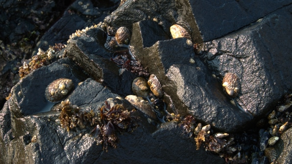 i 3 90683010 west coast waters got warmer it brought new species with it