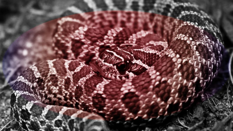 No, zombie snakes are not a thing