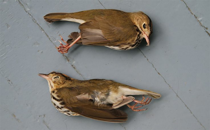 Birds Killed By Skyscrapers: An Oddly Life-Affirming Photo Essay