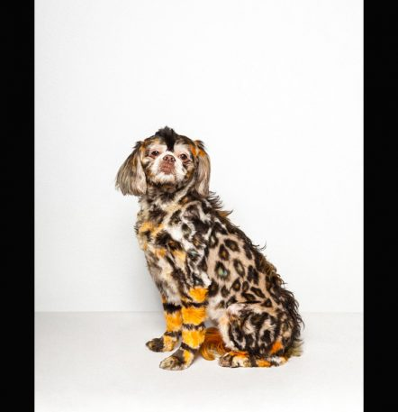 The Deeply Weird World Of Extreme Dog Grooming