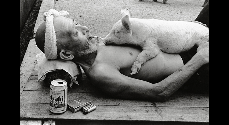 Heartwarming Photos Of A Farmer And His Beloved Pigs