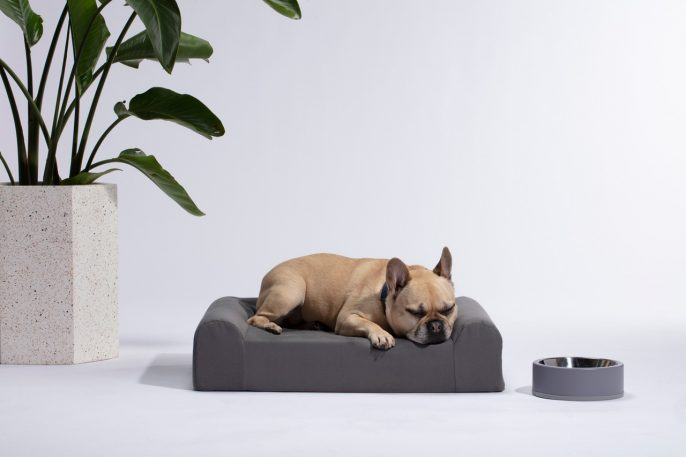Finally, dog gear for design snobs