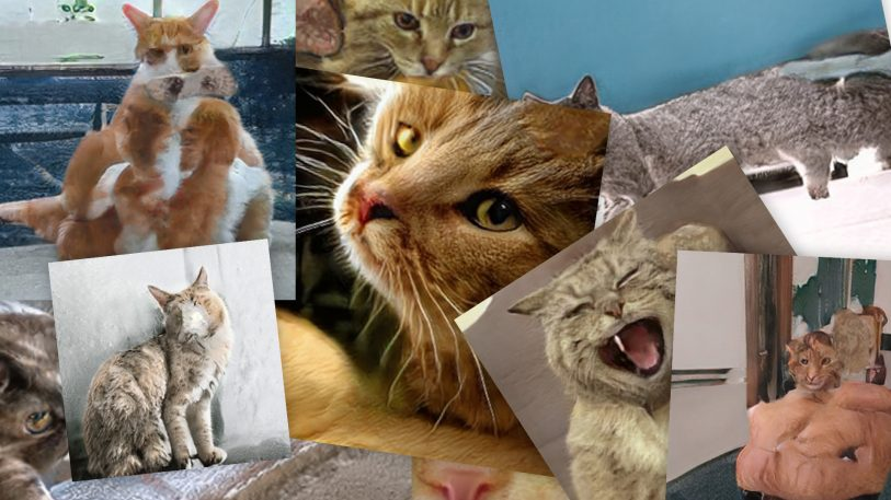 This AI dreams about cats–and they'll haunt your nightmares
