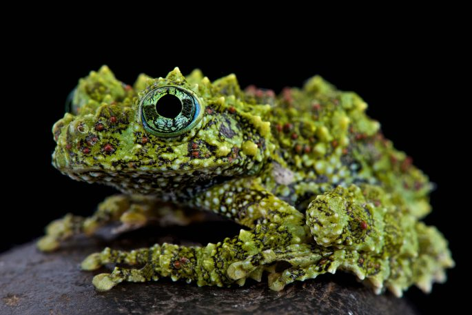 Check out these gorgeous rare amphibians, because they might soon be extinct