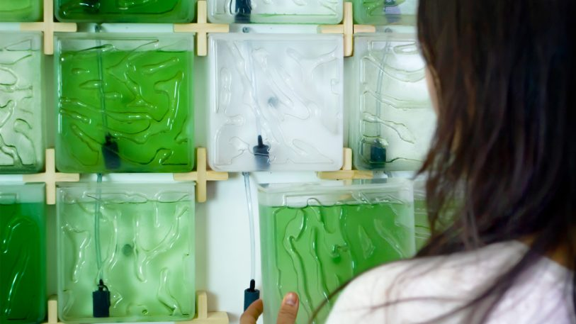 This kit makes it shockingly easy (and pretty) to farm your own algae at home